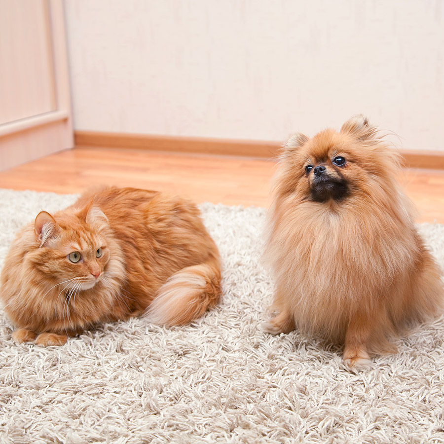 Echo carpet cleaning Irvine - Pet oder and stains